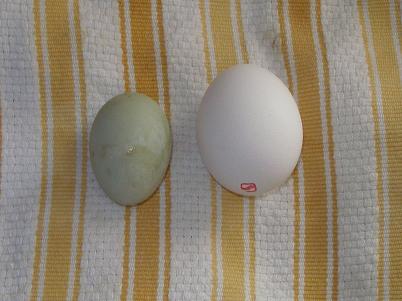 egg-_1.jpg