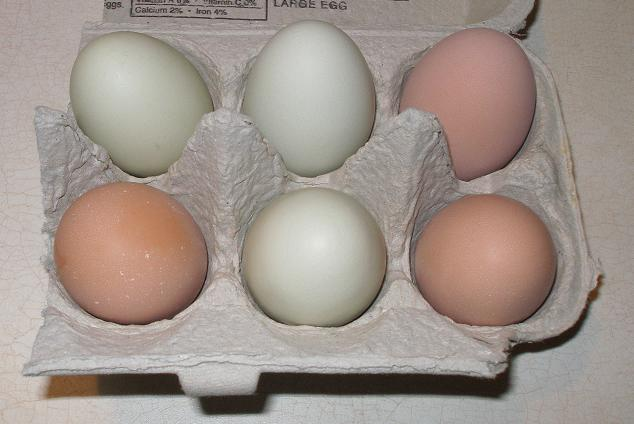 Green & Brown Eggs