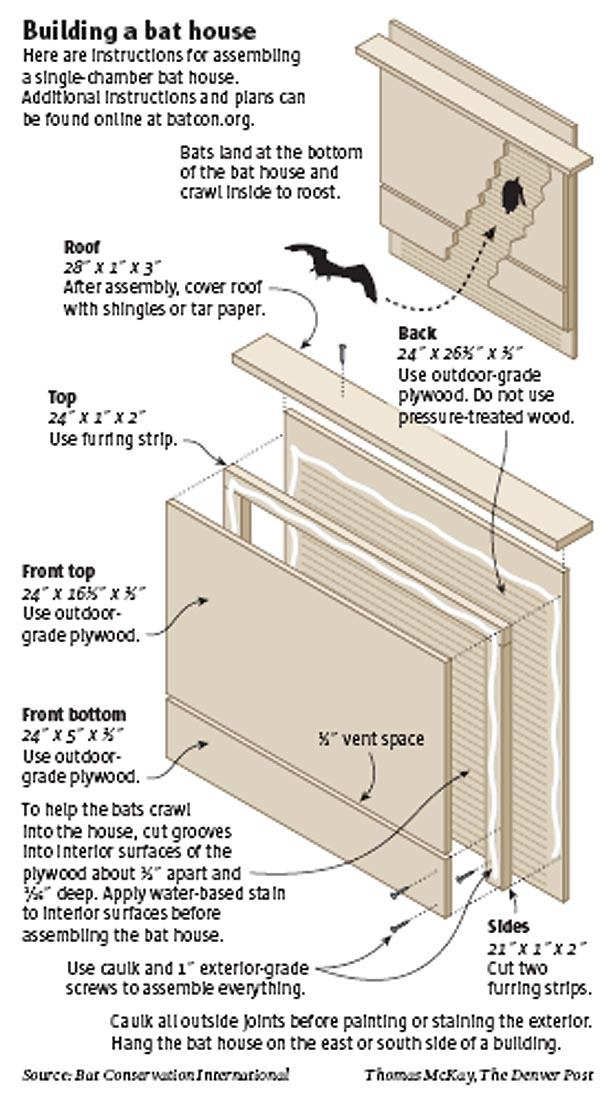chair and other free bat house plans for canada