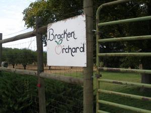 Bracken Orchard