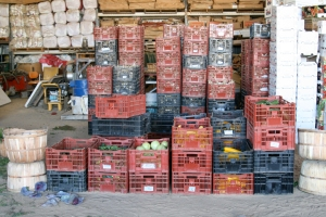 crates full of veggies by Rachel Carlson Photography