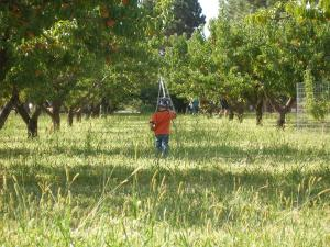 Henry in the orchard 2